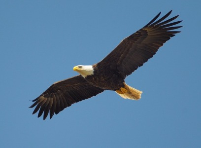eagle-864725_640.jpg